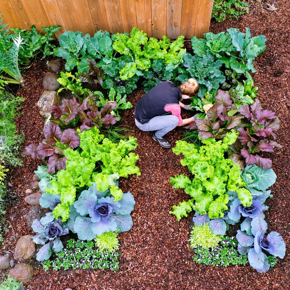 Cool Weather Vegetable Gardening Gorgeous Colors Winter