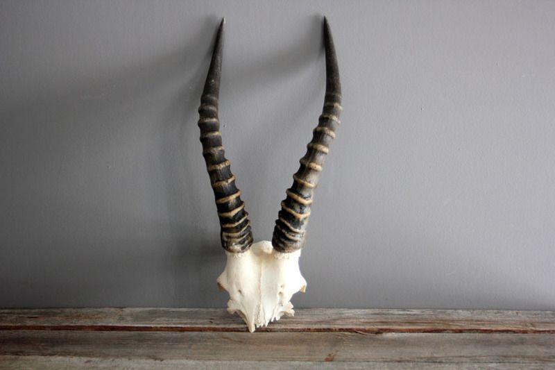 African Antelope Antlers
