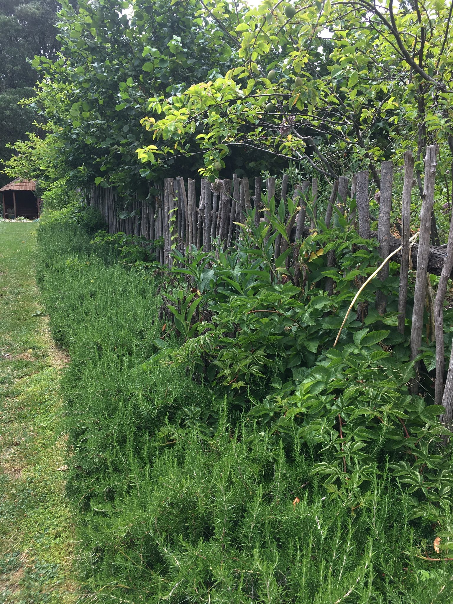Rustic fence and rosemary hedge. Garden of St Erth. | kitchen ...