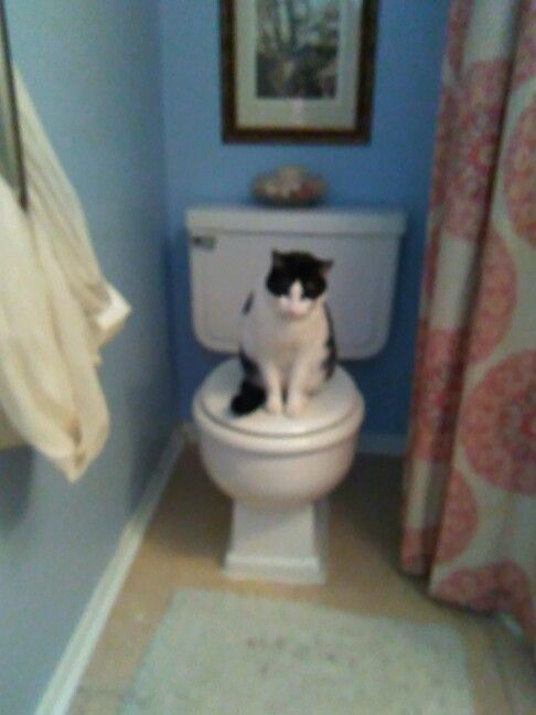 Weird things my cat does