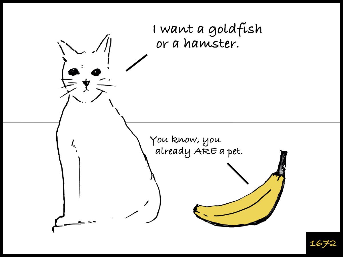 Cat And Banana Episode Facebook