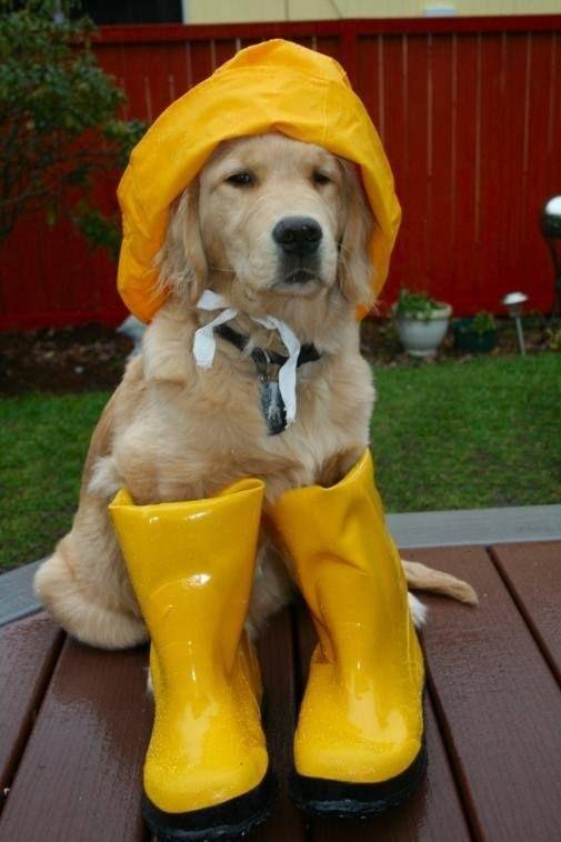 gotta stay dry!