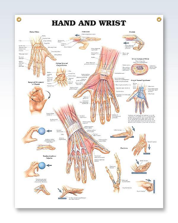 Hand and Wrist 20x26 | Carpal tunnel