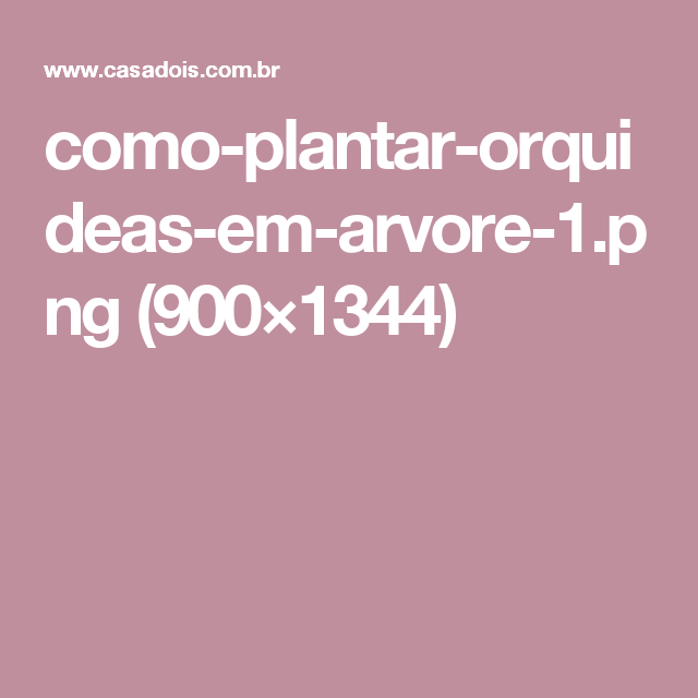 como-plantar-orquideas-em-arvore-1.png (900×1344)