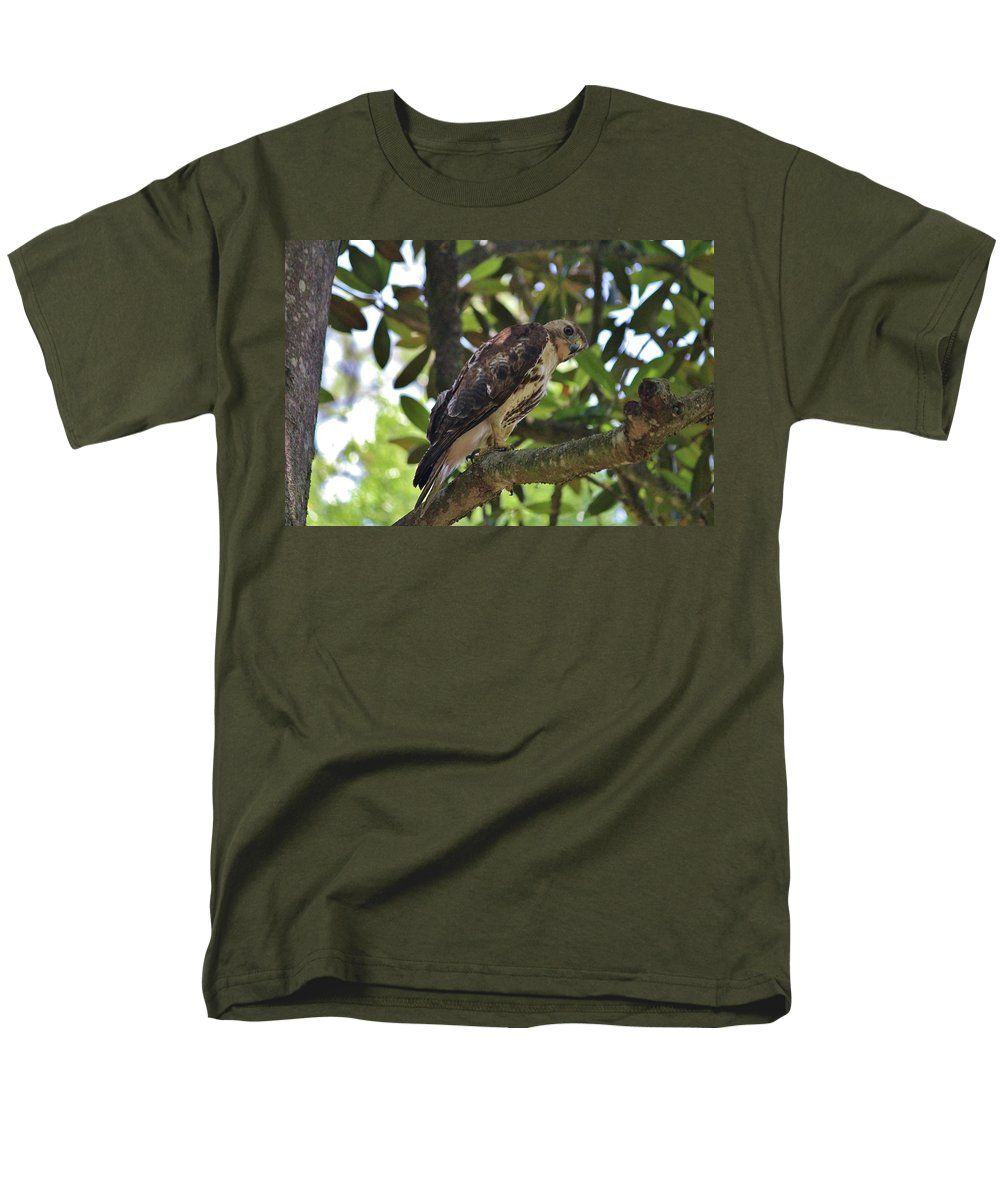 Bird Men's T-Shirt (Regular Fit) featuring the photograph People Watching Hawk by Cynthia Guinn