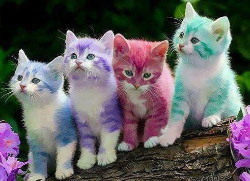 Colorful Kitties Rainbow Kittens Kitten Wallpaper Pets Beautiful cute kitten wallpaper for