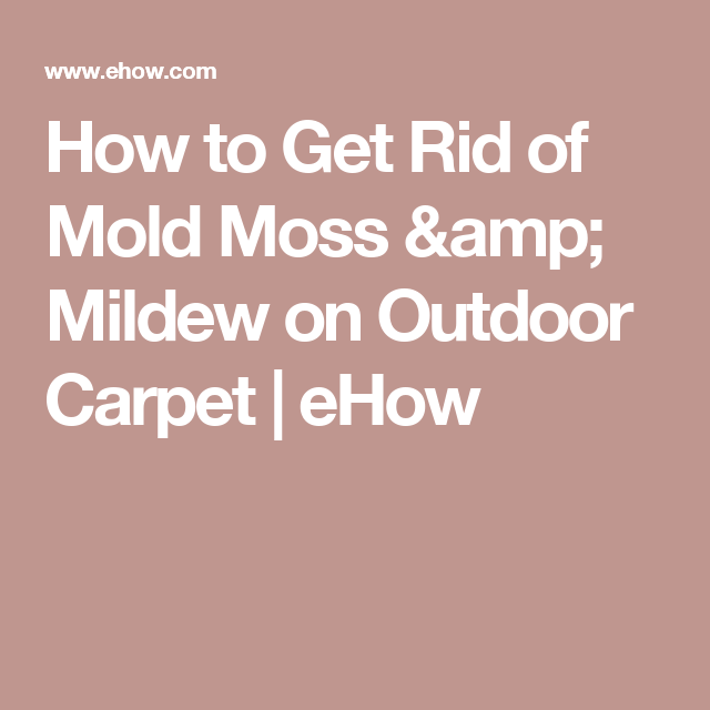How To Get Rid Of Mold Moss Mildew On Outdoor Carpet Get Rid Of Mold Outdoor Carpet Mold Remover