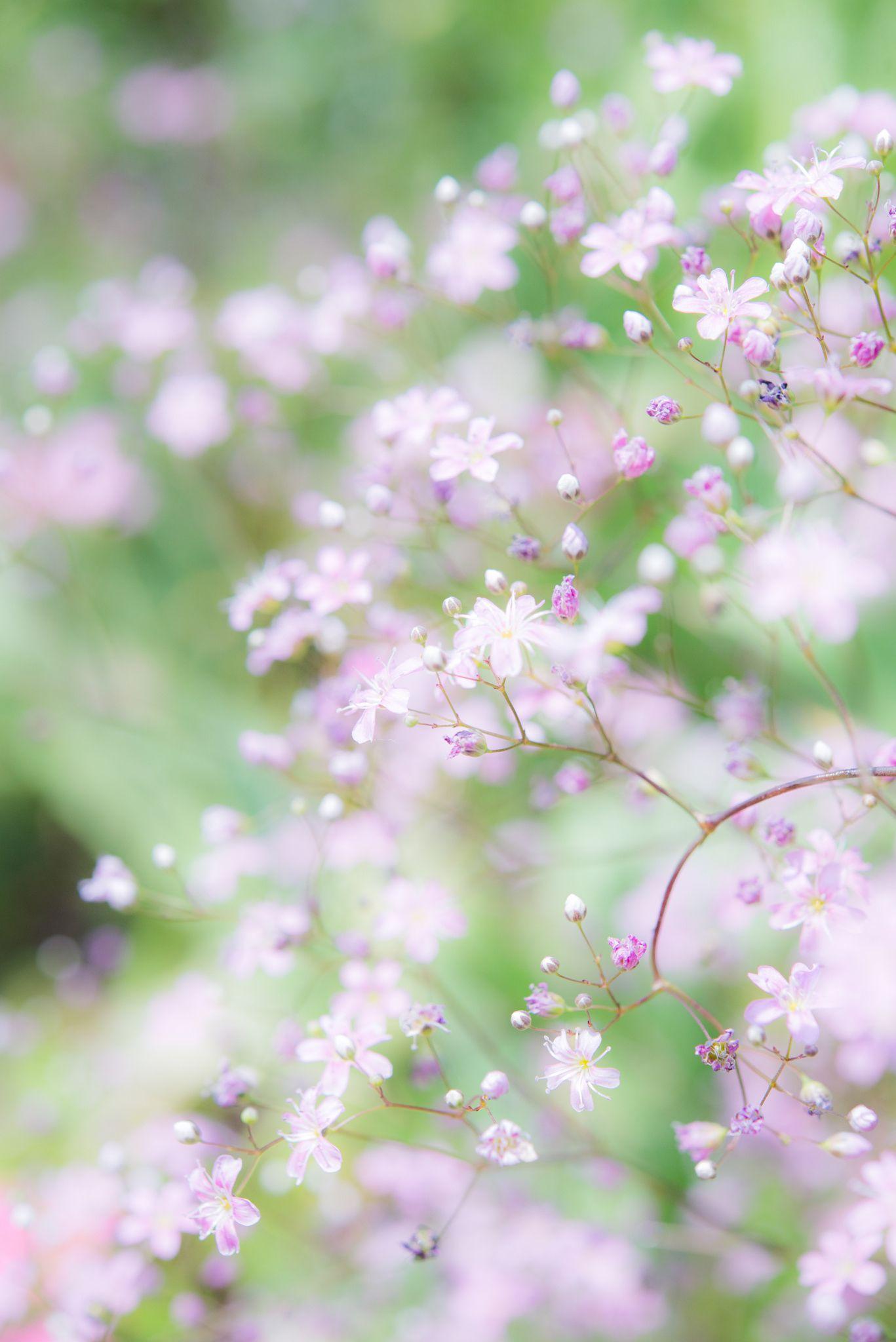 unas hermosas flores | naturales a y paisajes | Pinterest | Hermosas ...