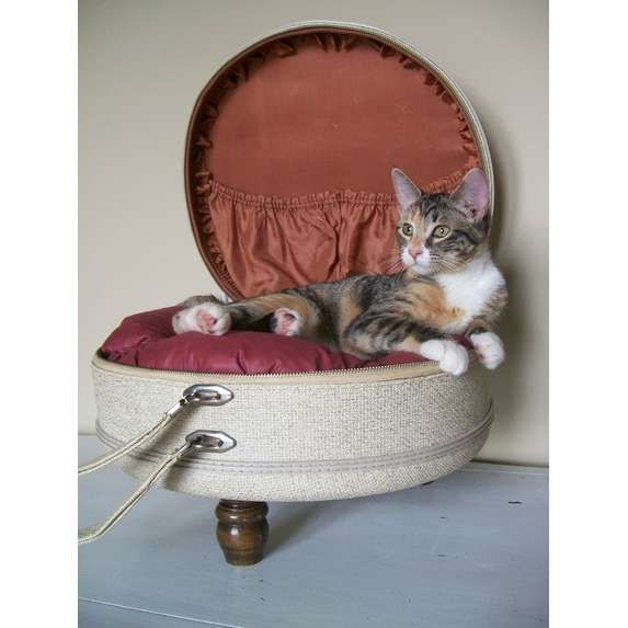 What To Buy For Your Cat Cool Suitcase Old Suitcases Pet Bed Cat Bed