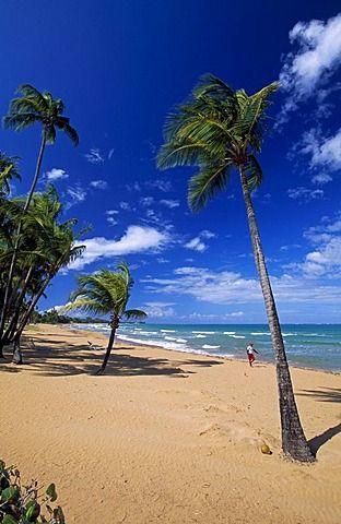 Beach With Palm Trees Coco Rio Grande Puerto Rico Caribbean
