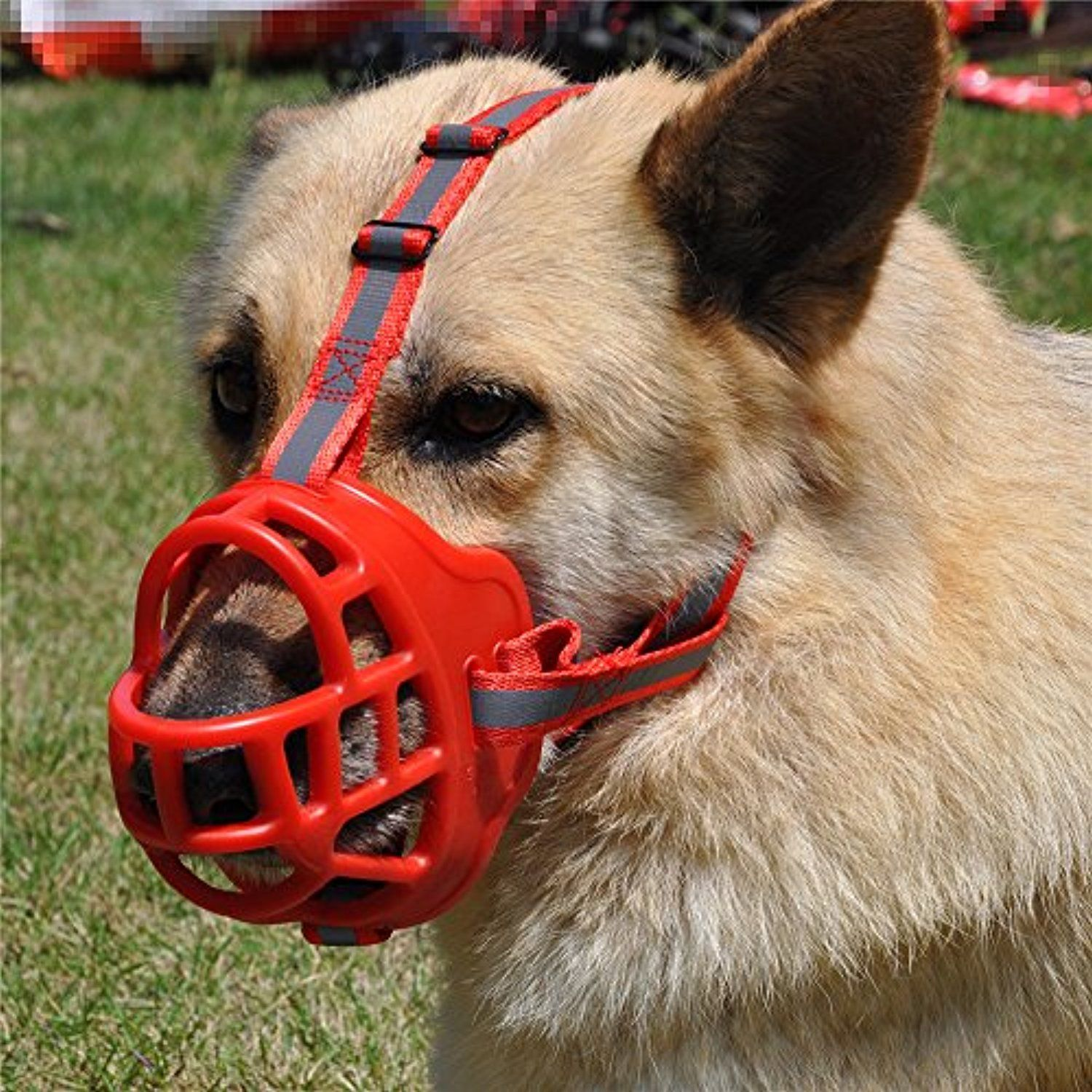 Pin On Collars Harnesses Leashes