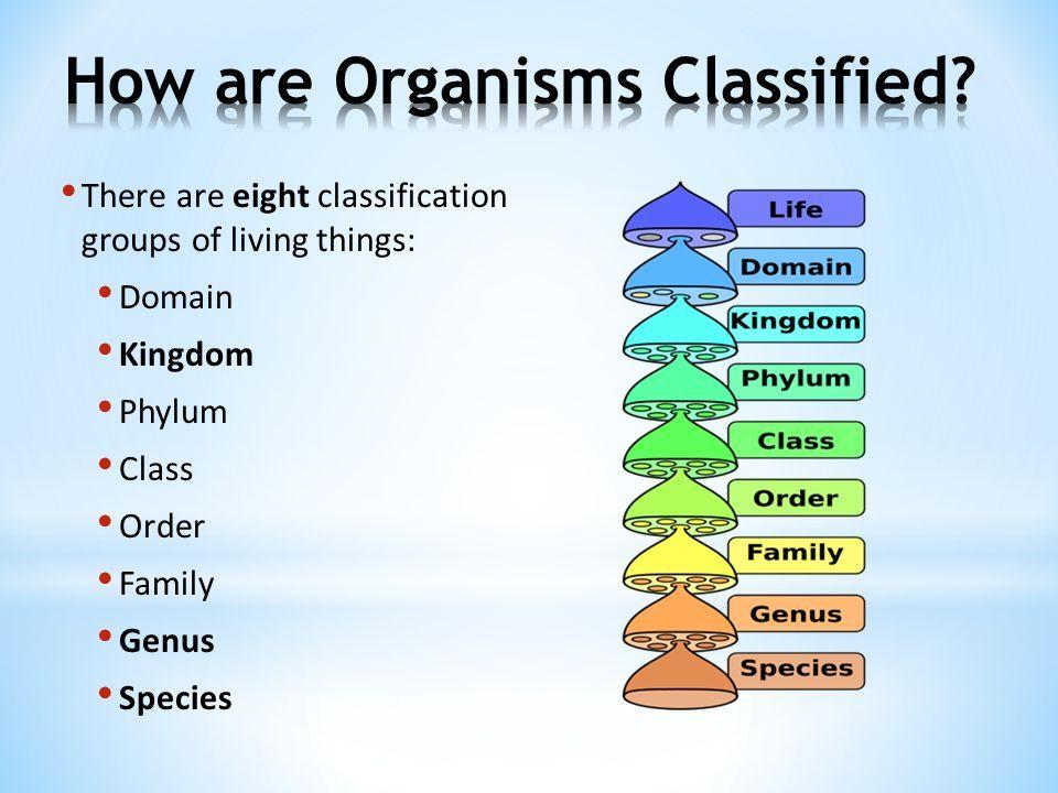 12++ Animal kingdom classification chart images