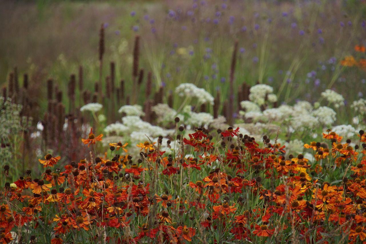 Piet oudolf public garden hauser wirth somerset for Pflanzengestaltung garten
