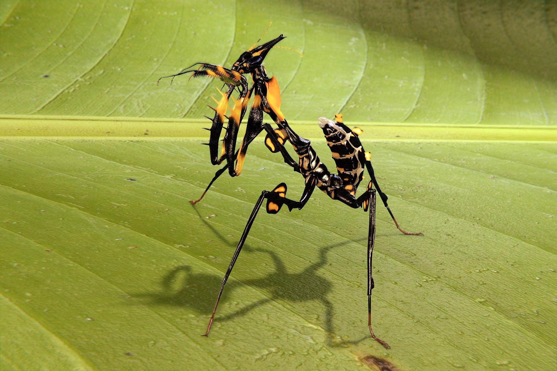 mantis diabolica - Buscar con Google