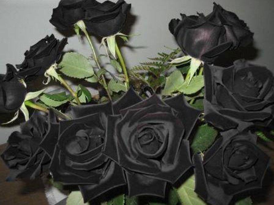 花 黒い 言葉 バラ バラを贈る時に意識したい!花言葉と贈る本数で変わる意味とは?|花や花束の宅配・フラワーギフト通販なら花キューピット。贈り物・プレゼントで花を贈ろう。