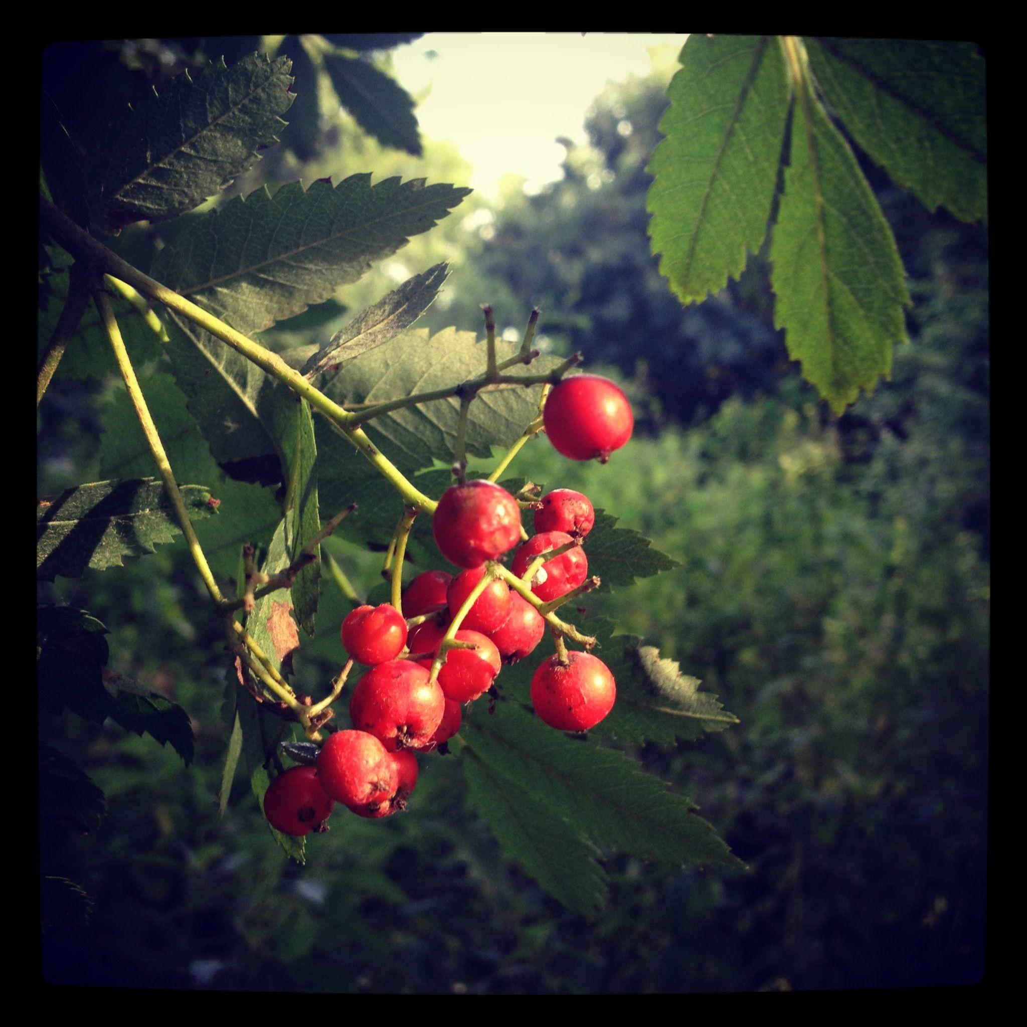 Twig & Berries ;)