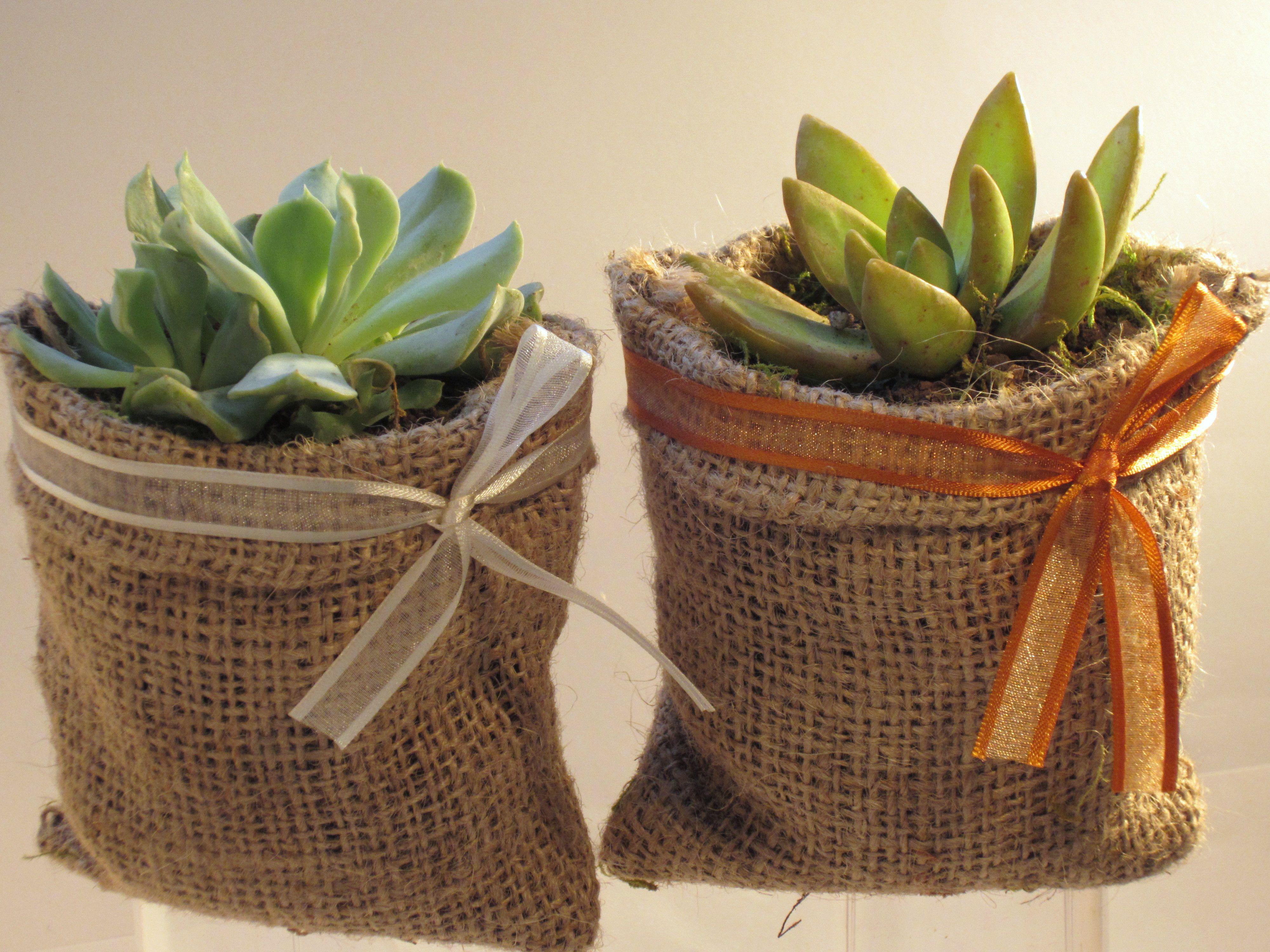 Duo de suculentas en maceta de arpillera bautizo - Cactus en macetas pequenas ...