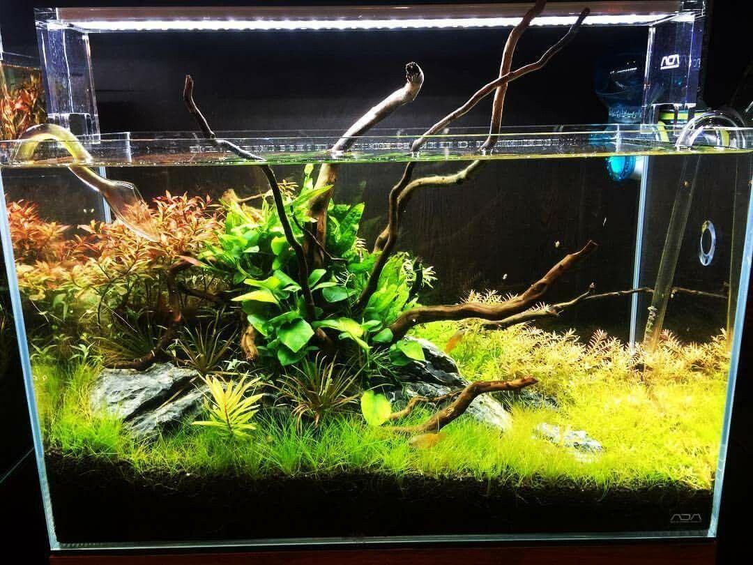 Freshwater aquarium fish for sale philippines - Aquarium