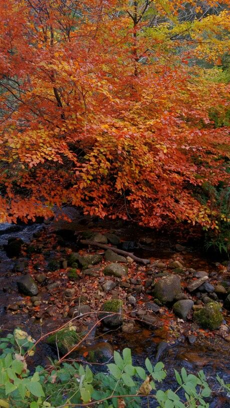 Enniskerry Woods #enniskerry #woods #autumn #leaves #wicklow