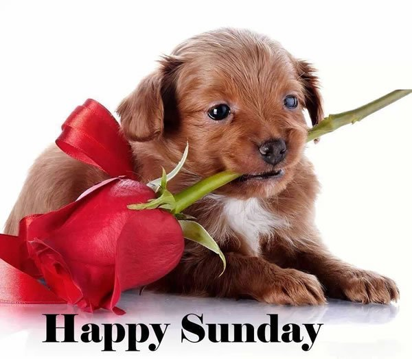 Callas Wagner On Twitter Good Morning Puppy Puppy Lover Puppies