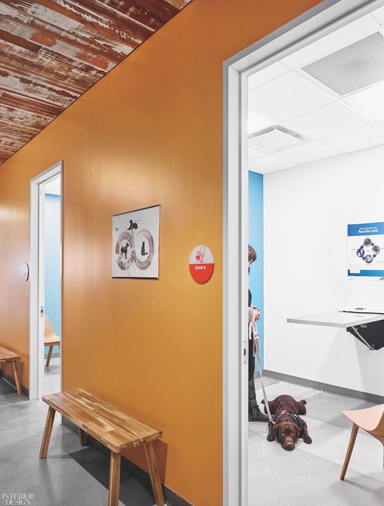 Perkins + Will Designs an Austin, Texas, Veterinary Clinic