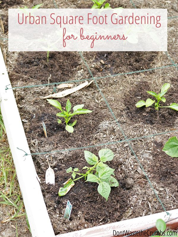 Urban Square Foot Gardening For Beginners Gardens