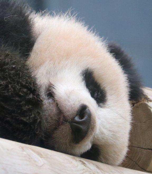 Pin De Adrï Mätämoros Sïlva En Pandas