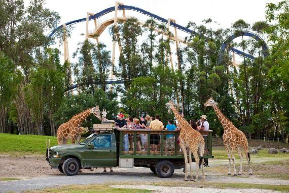 89e8de390890a07fcad88b22446b5d39 - Is The Safari Included In Busch Gardens