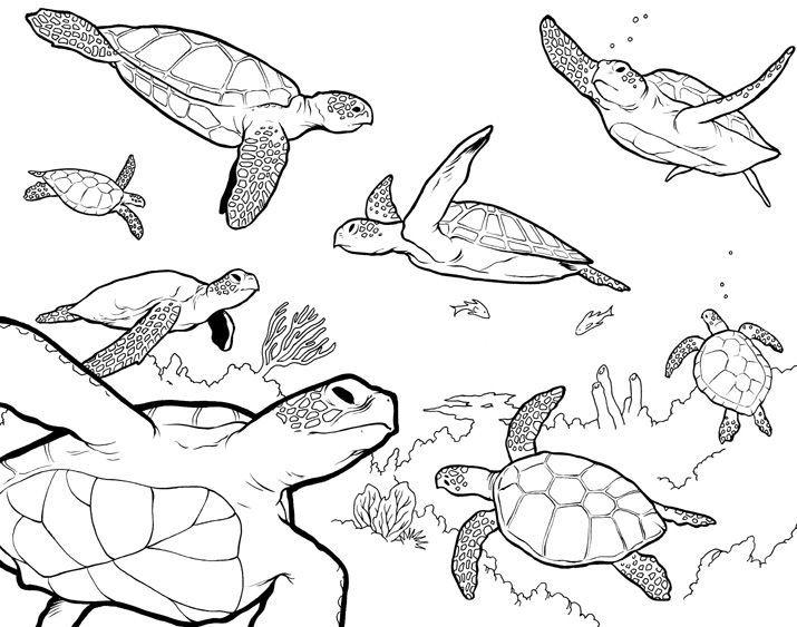 Морские животные рисунок карандашом