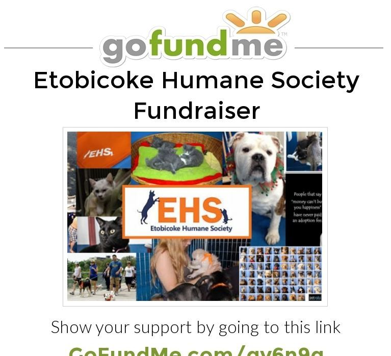 Helping Us Save The Etobicoke Humane Society In Toronto Ontario Canada Please Re Pin My Canadian Foll With Images Humane Society Fundraiser Humane Society Toronto Ontario