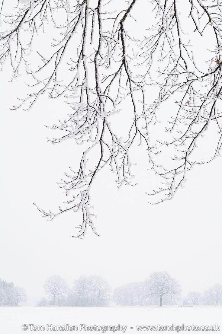 Frosty Branches. (30x42cm) | Winter landscape, Landscaping and ...