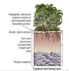 The soil found in the tropical rainforest biome is not very ...