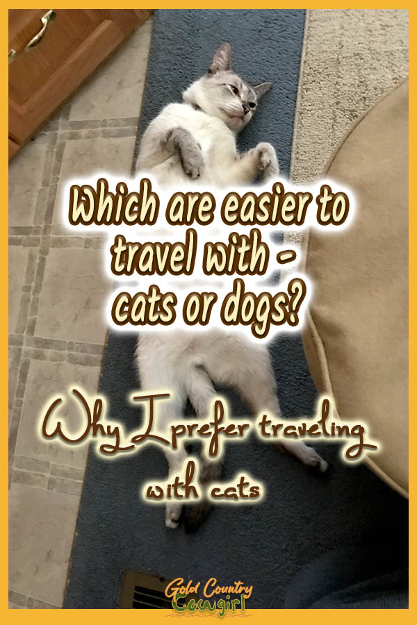 Traveling With Cats Are Cats Better Traveling Companions Than Dogs In 2020 Cat Travel Pet Friendly Hotels
