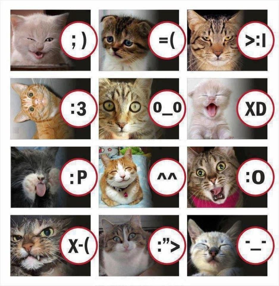 If Cats Could Use A Mobile Phone This Is What Their Smileys Would
