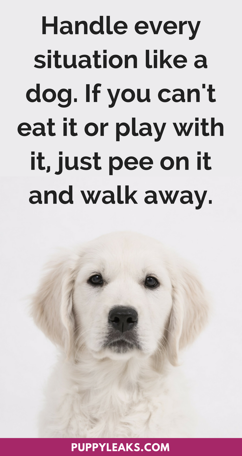 30 Cute Funny Dog Quotes Dog Quotes Funny Dog Quotes Snarky Quotes