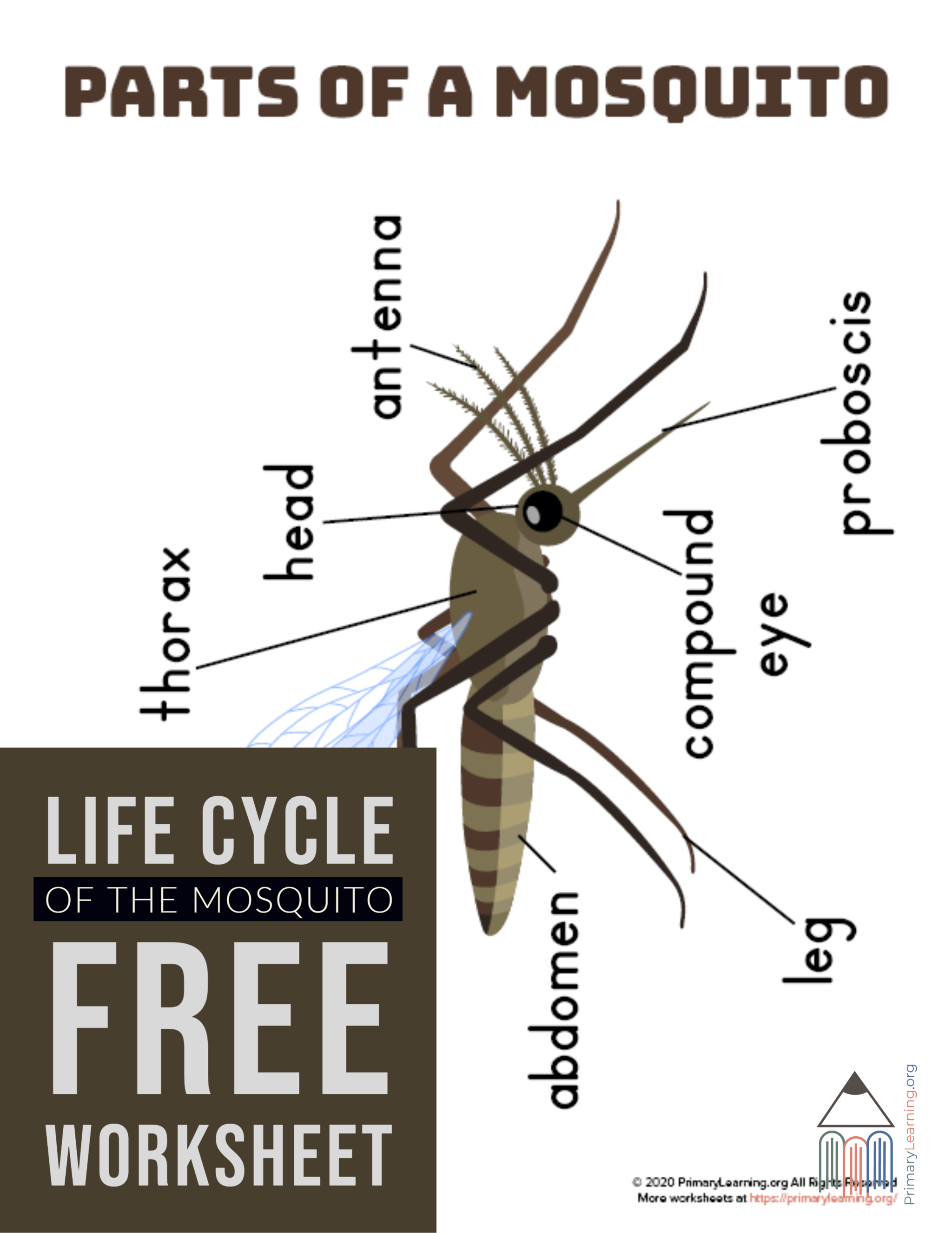 Parts Of A Mosquito