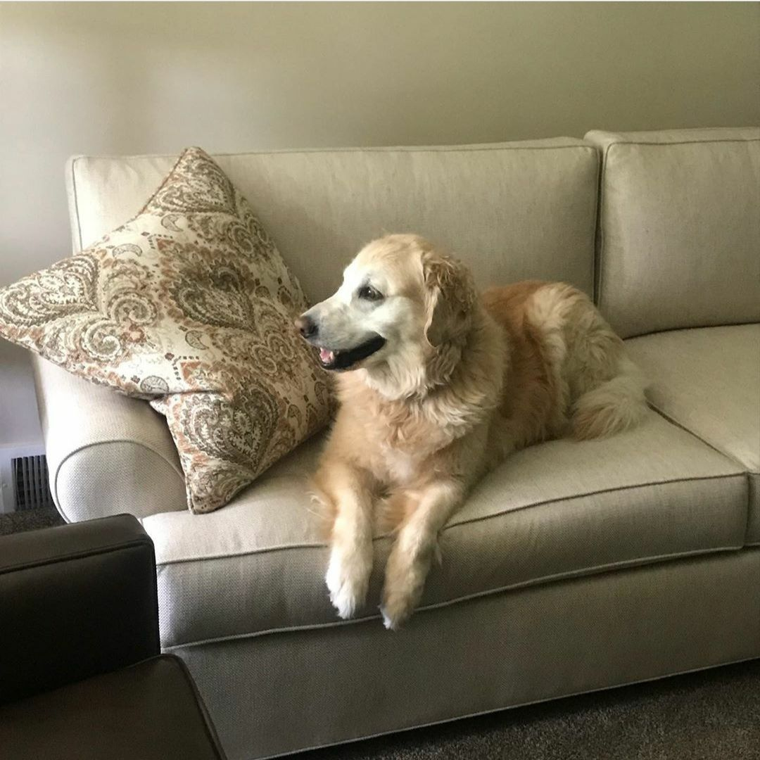 Pet Approved Fabrics In 2020 Leather Couch Sofa Images Love Seat