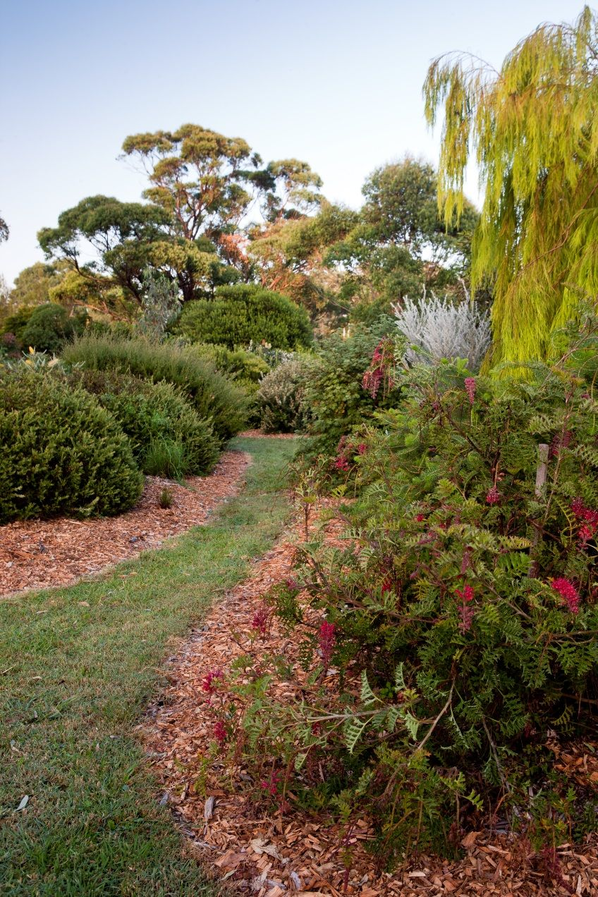 An inspiring native garden rings bells for Linda Ross and to the ...