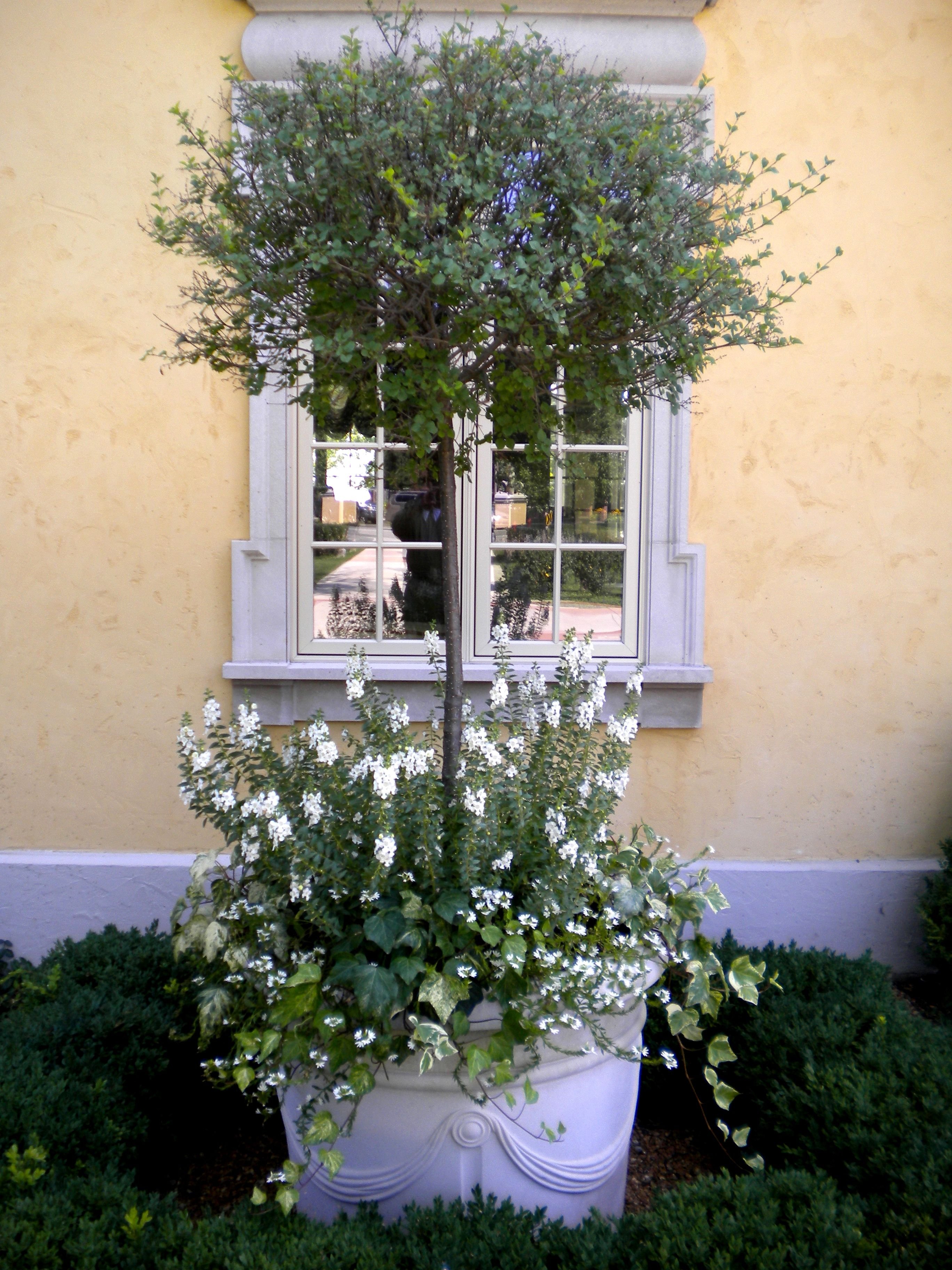 Tall Planter With White And Dark Green Scheme #Planters #Nature