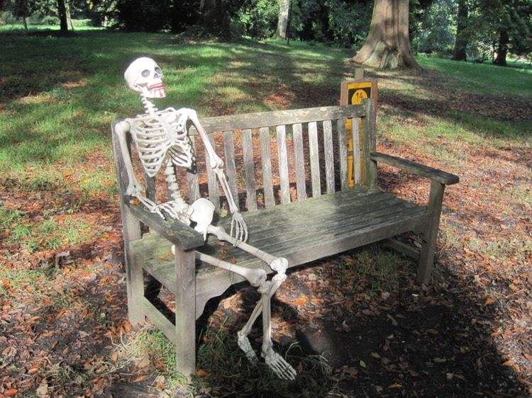 """Résultat de recherche d'images pour """"squelette banc"""""""