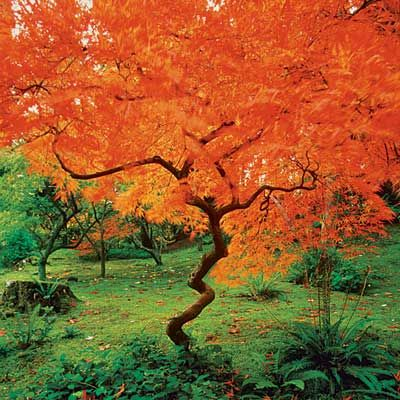 10 Best Trees And Shrubs For Fall Color Landscape Trees And Shrubs Garden Trees