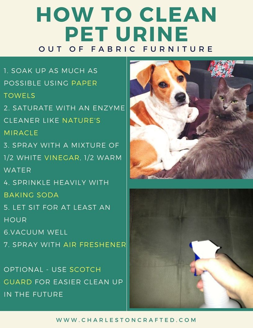 Getting Pet Urine Odor Out Of A Microfiber Couch Pet Urine Cleaning Pet Urine Urinal