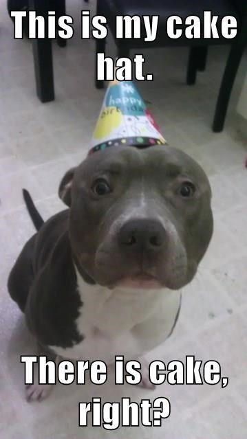 Pin By Ron Worster On Animals Happy Birthday Pitbull