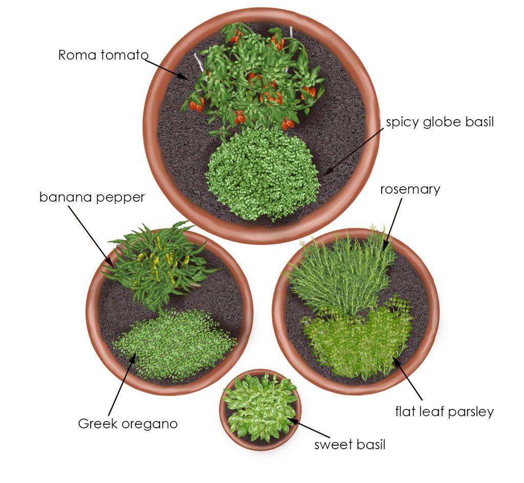 How to Grow a Pizza Garden How to Grow a Pizza Garden new pics