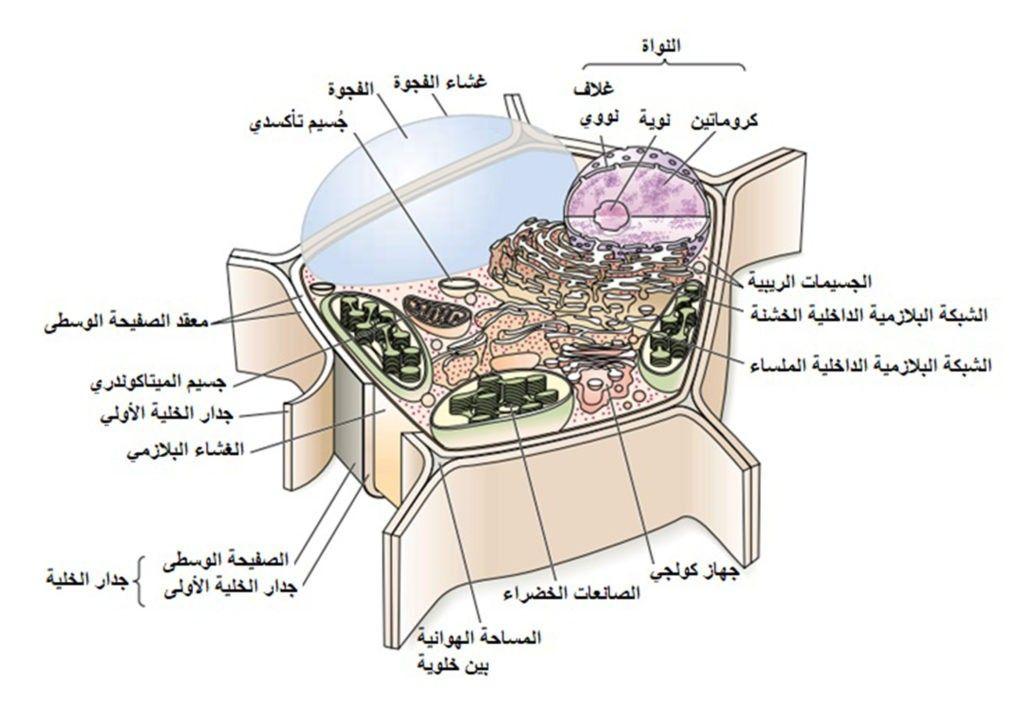 الخلية النباتية Plant Cell التركيب والوظيفة الجزء 1 Plant Cell Plants Accessories