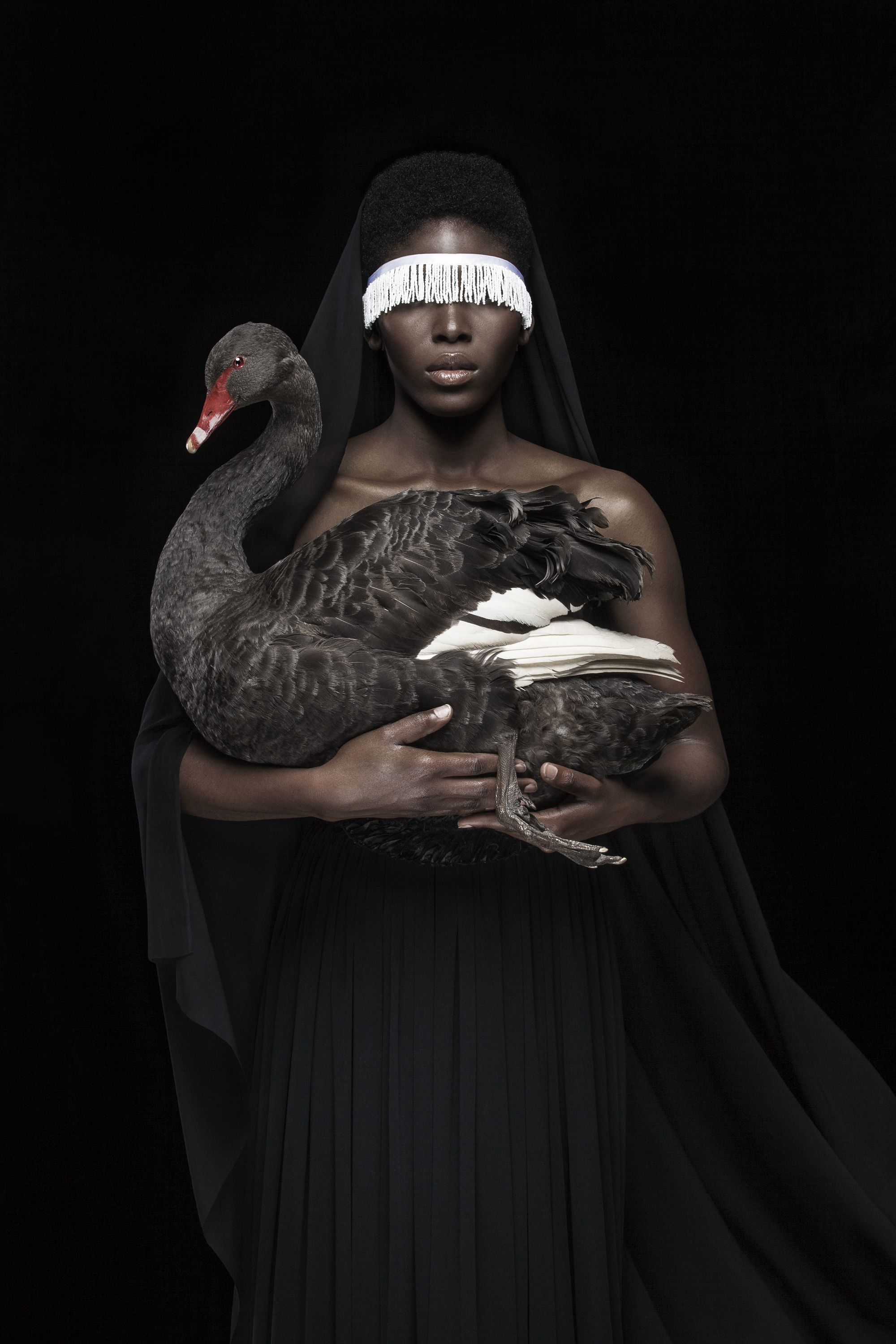 Justin Dingwall,This is not a black swan, 2017