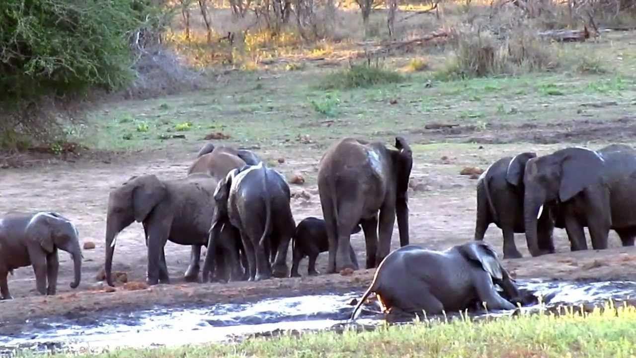 Elephant S Mudbath On A Hot Day Olifanten Dieren Dierentuin