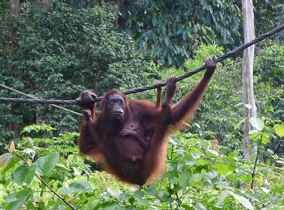 Sandakan Borneo