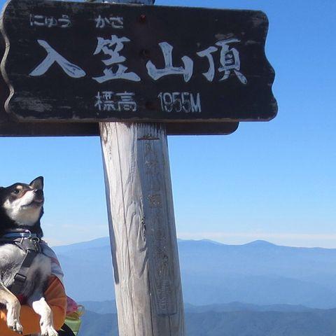 みか ゴンドラと、歩きで登山。山頂は気持ちよかったけど、人は大勢いました。またどこかに犬と登りたいです。 PetSmile