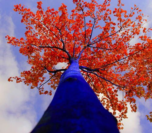 Blue Trees by Konstantin Dimopoulos